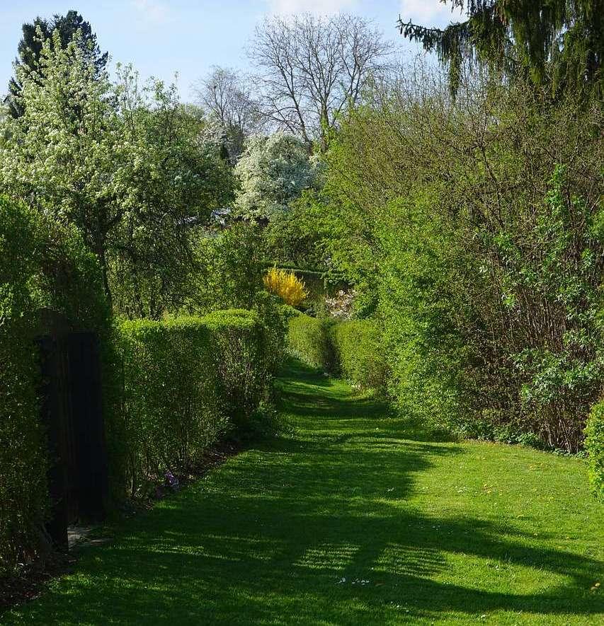 živé ploty řez